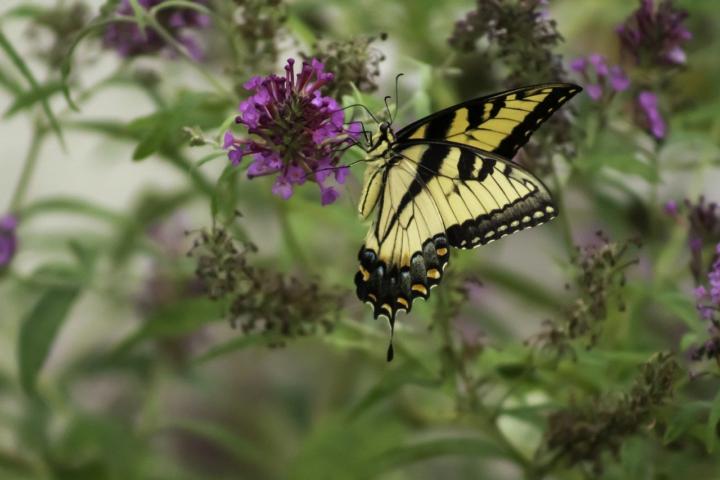 Martwick congratulates Taft Freshman Academy on pollinator garden grant